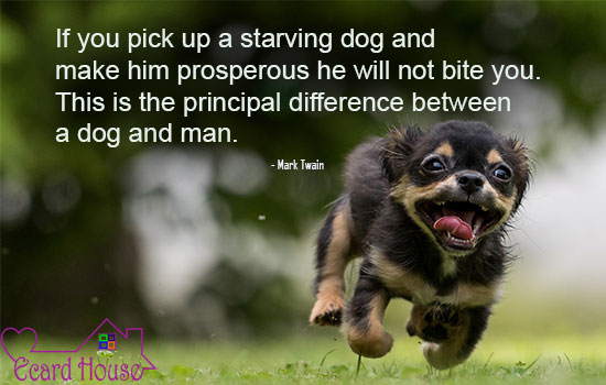 Difference in dogs & men
