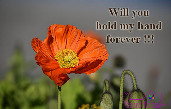 Will You Hold My Hand Forever !